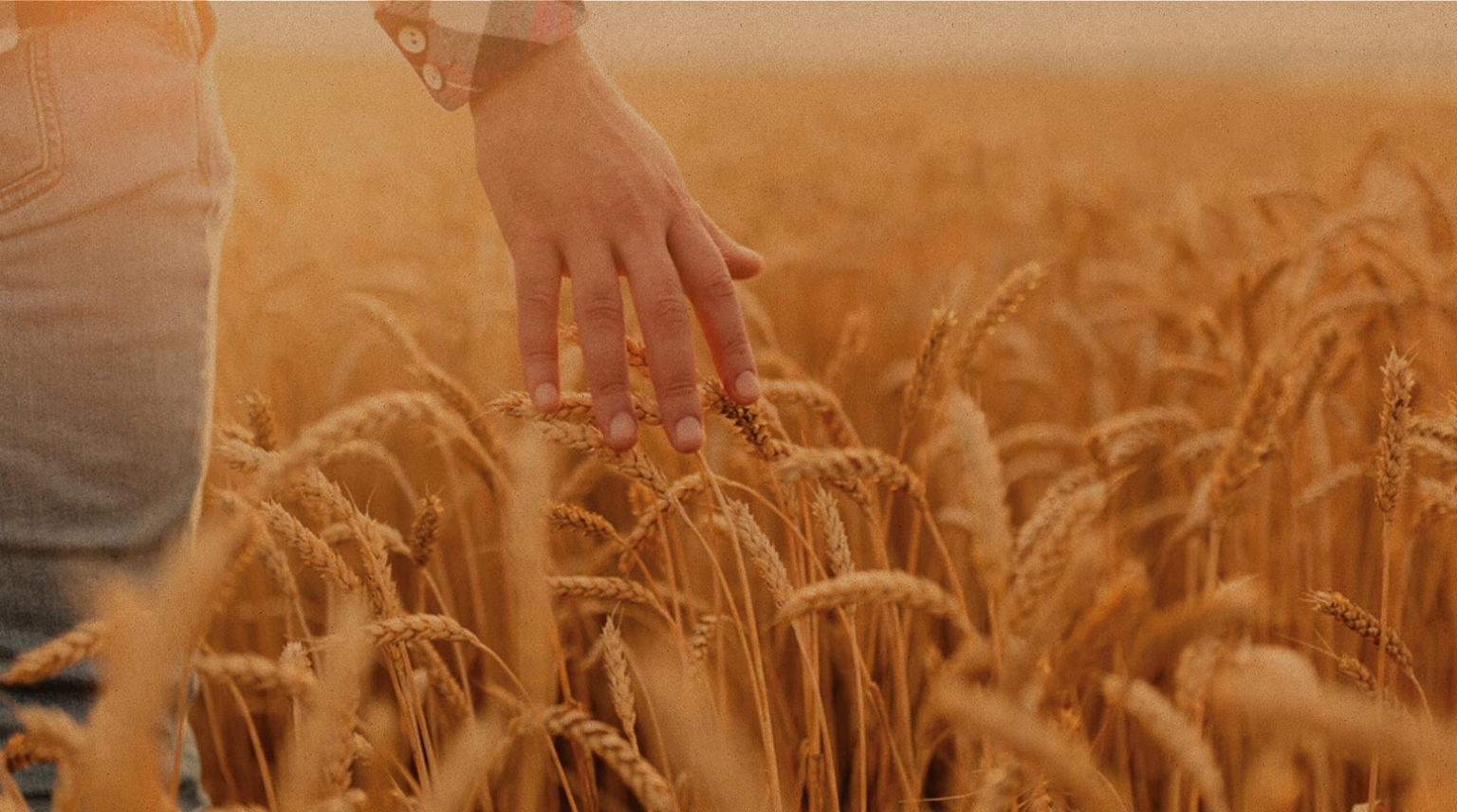 Donnons les moyens à la bio d'excellence d'exister Biocer propose à ses agriculteurs-adhérents un accompagnement global, de la production à la 1er mise sur le marché