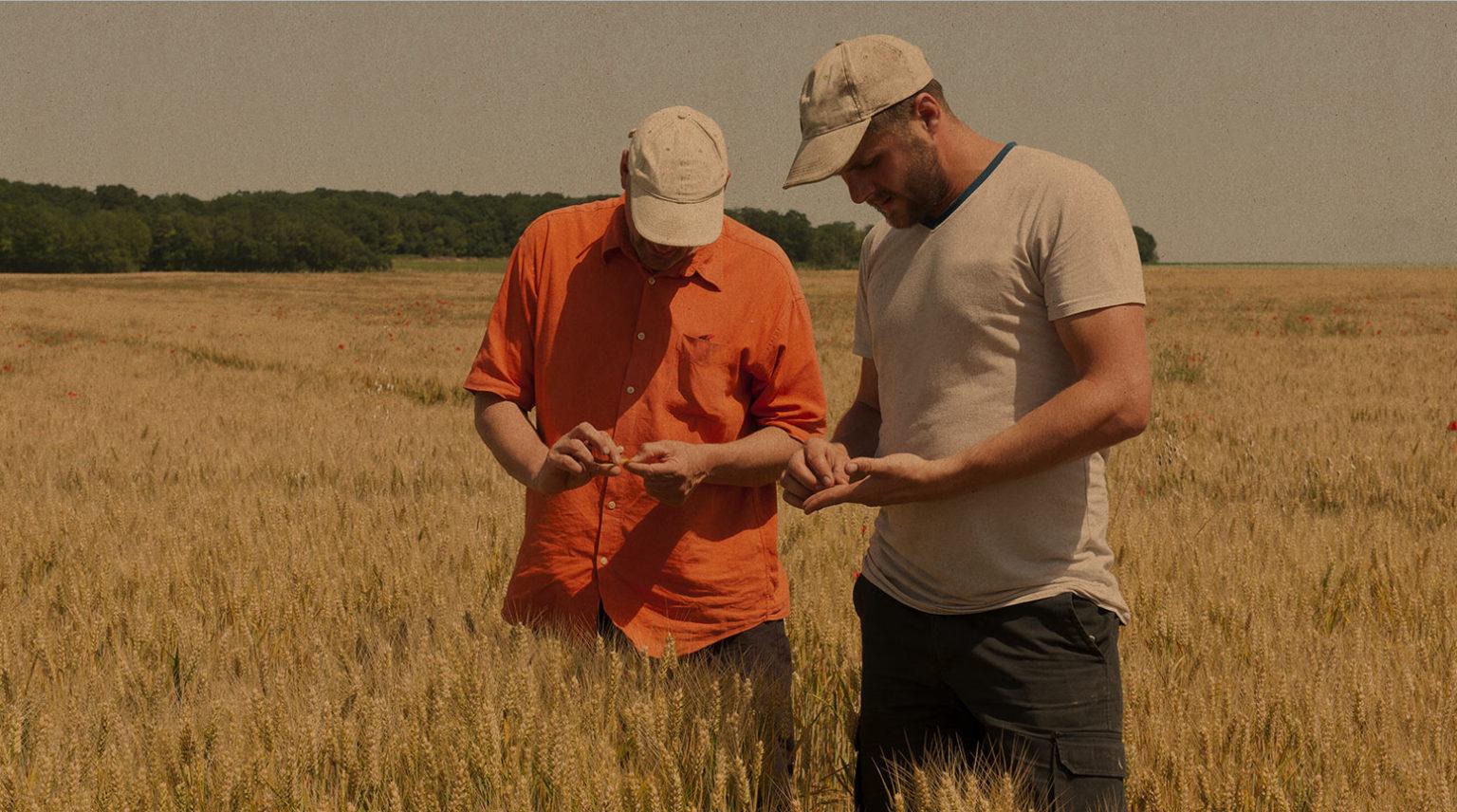 Faites le choix de l'expertise Biocer Intégrez un réseau de plus de 250 agriculteurs du nord-ouest de la France,   engagés dans le 100% bio d'excellence